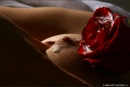 Anna in Erotic Rose gallery from MPLSTUDIOS by Alexander Fedorov - #3